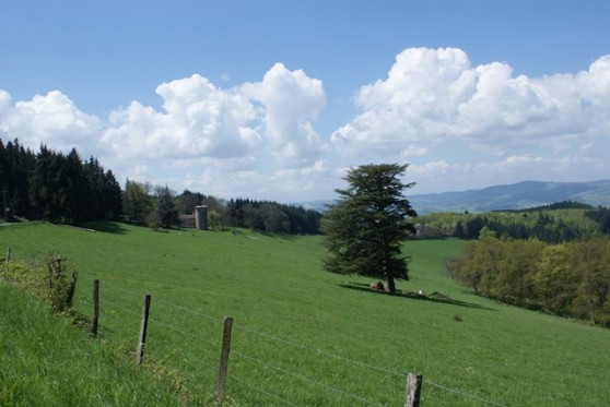 Promenade dans les monts du Lyonnais